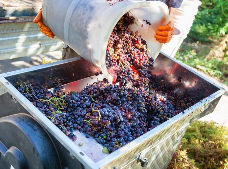 winehistory-025
