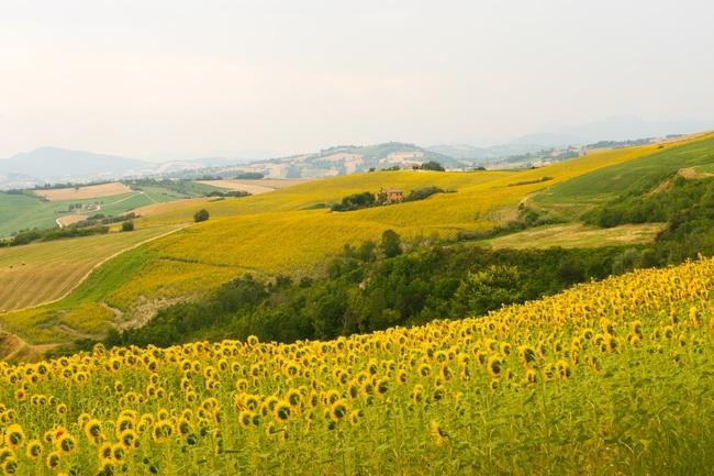 本頁圖片/檔案 - winearea-136
