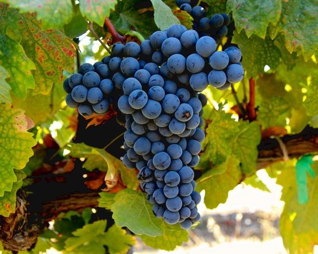 本頁圖片/檔案 - winehistory-093