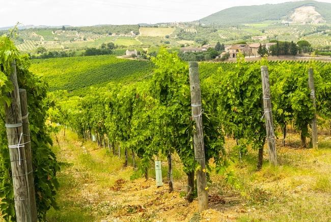 本頁圖片/檔案 - winearea- 062