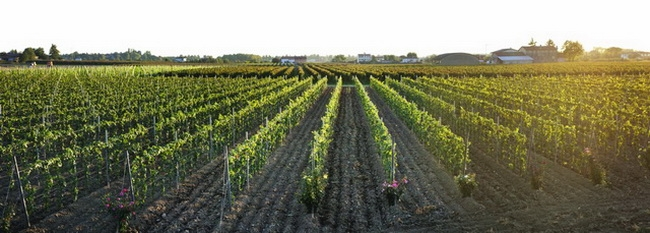 本頁圖片/檔案 - winearea-148